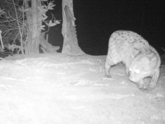 2015 CBC Fishing Cat Survey