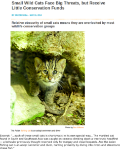 Small Wild Cats Face Big Threats but Receive Little Conservation Funds