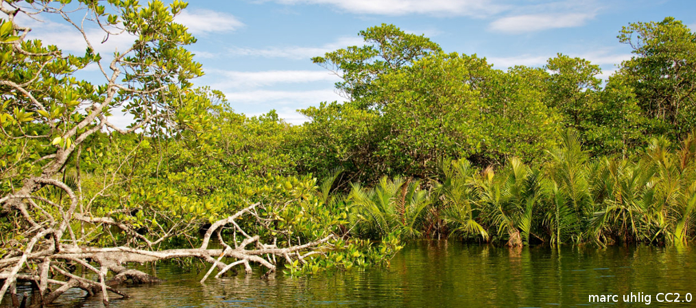 In Praise of Mangroves