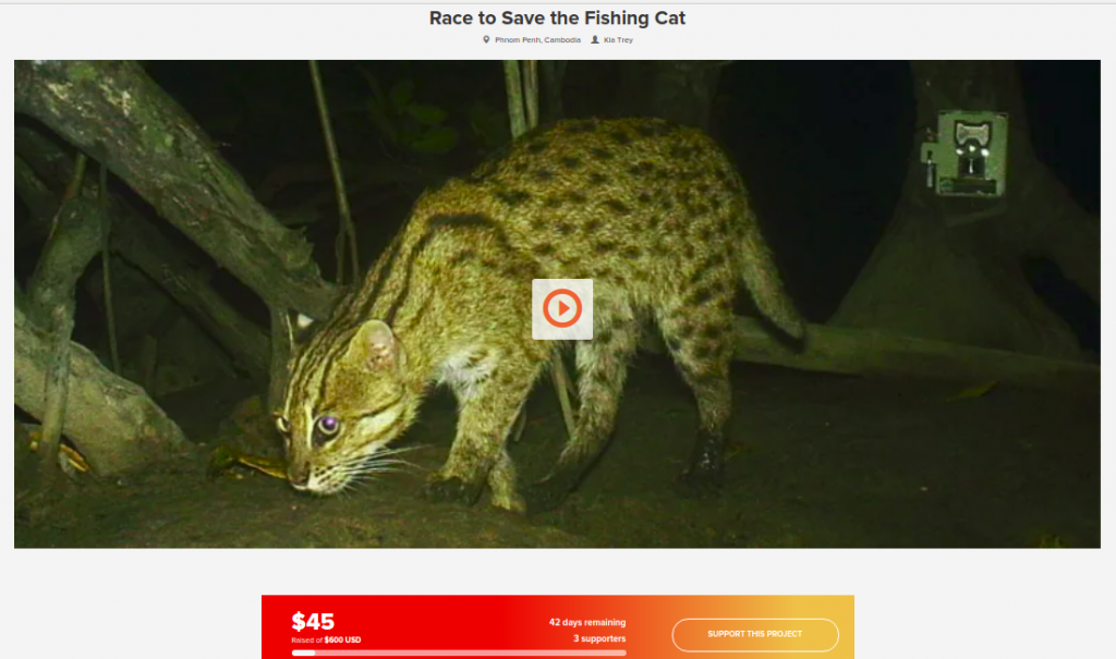 Our Race to Save the Fishing Cat crowdfunding campaign